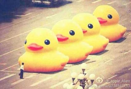 tiananmen ducks